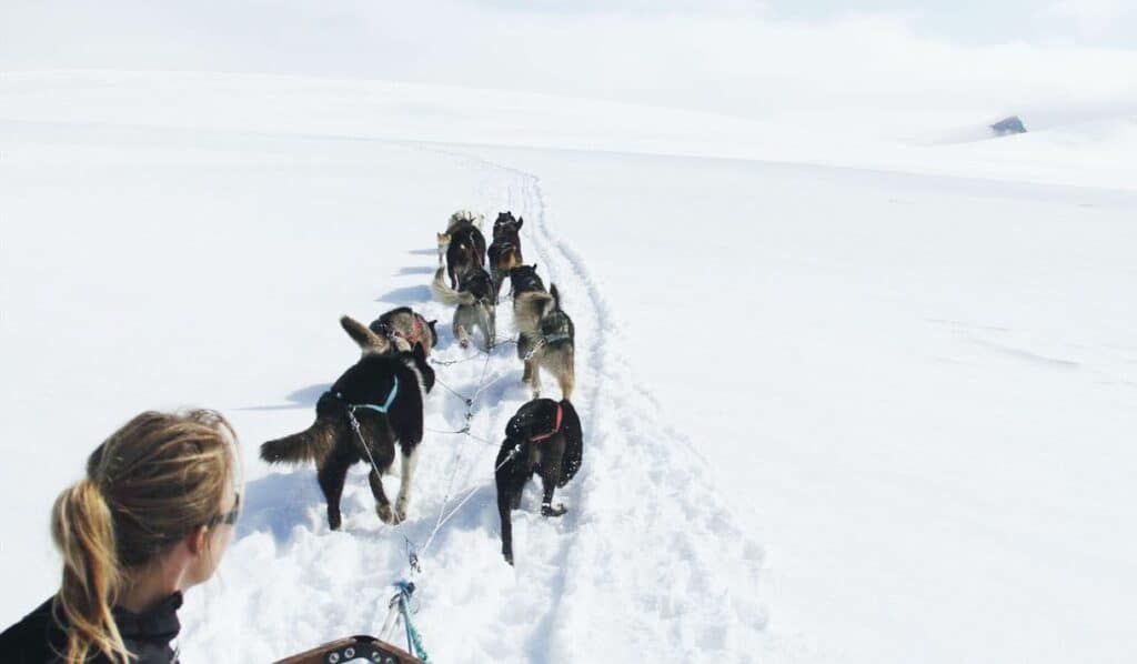 Mountaintrip with dogsledge UK