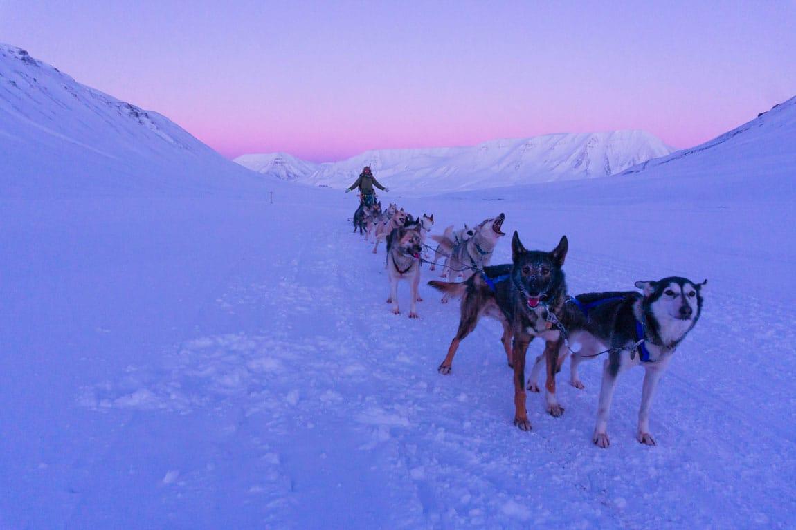 Livet på Svalbard og Green Dog 2