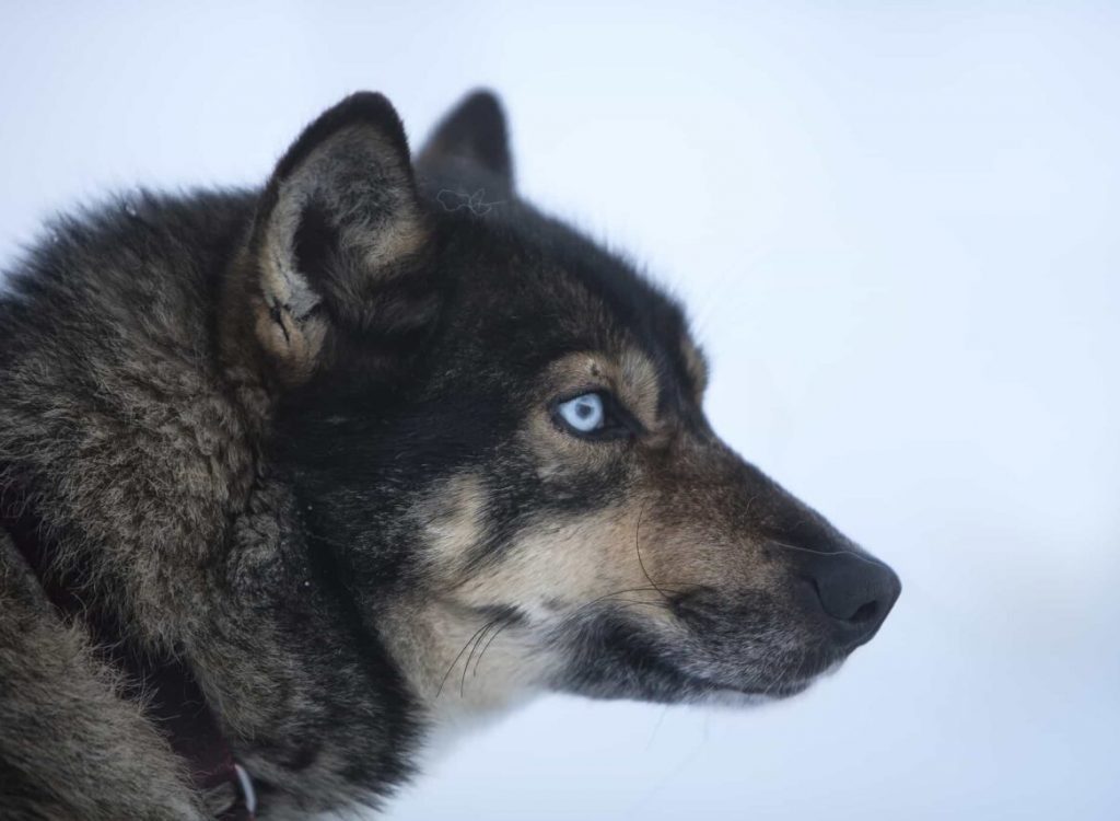 Med hundeslede til isgrotta NO