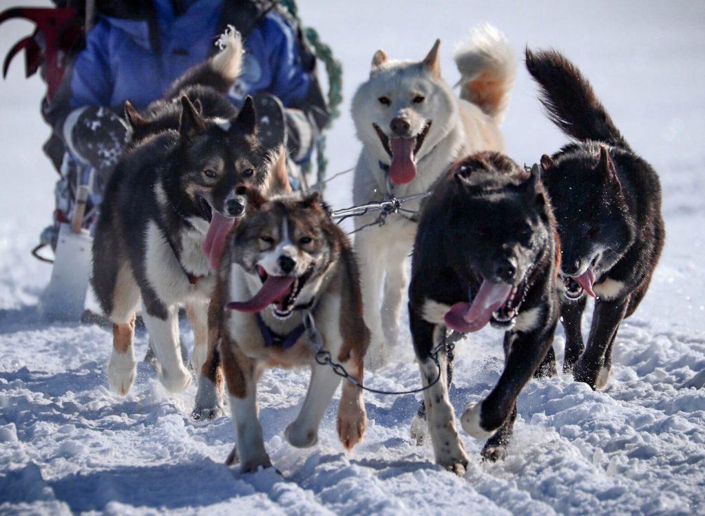 Halvdags hundesledetur i Bolterdalen NO