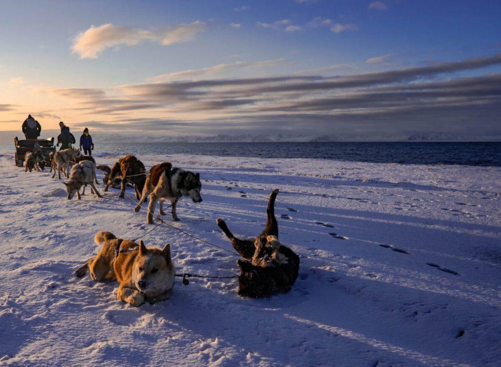 Hunder og hav NO