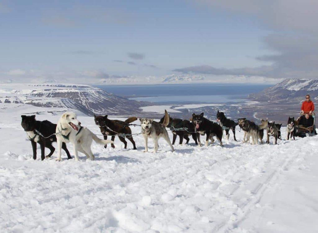 Fjelltur med hundeslede