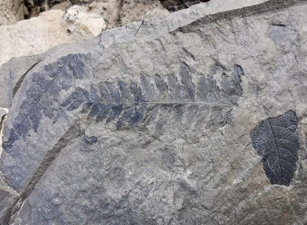 Fossiljakt by Isabel Zürn (18)