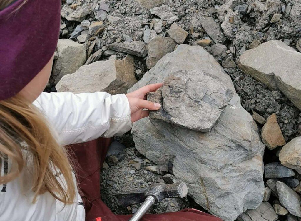 Fossiljakt by Isabel Zürn (36)