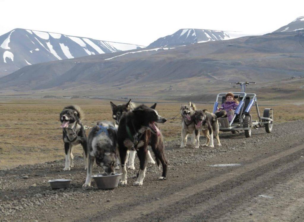 Hundesledetur på hjul NO